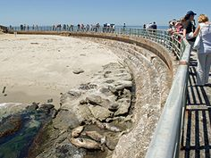 La Jolla Cove Guide | La Jolla - seawall at the Children's Pool home of the La Jolla sea lions