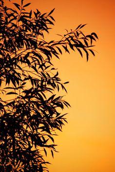 Orange Leaf Silhouette by VeraKratochvil