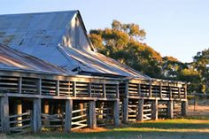 Elevated Australian sheering shed with shaded livestock shelter beneath - Modern Australian Sheds, Australian Farm, American Barn, Shed Design, Old Buildings, Timber Buildings, Old Barns, Shed Plans, The Ranch