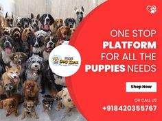 CONTACT-8420355767) All types of dog breed food Accessories here available at PUPPY DOG ZONE Types Of Dogs Breeds, All Types Of Dogs, Best Puppies, Dogs And Puppies, Dog Belt, Cat Shampoo, Dog Shop, Black Lab Puppies, Puppy Food