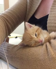 Woman Hears Meow from Trash and Finds a Tiny Kitten Looking for Food and Love