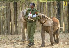 Stunning Photographs Show Kenyan Tribes Working To Save Baby Elephants | HuffPost