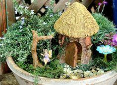 2016 Trends set by Miniature Gardeners