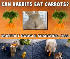 Are carrots as safe for rabbits as cartoons make it look? My Bunbun take a closer look at this question in this video Rabbit Eating, Rabbit Food, Can Rabbits Eat Carrots, Rabbit Gif, Closer, Cartoons, Bunny, Canning, Animal