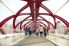 Calgary Peace Bridge Grand Opening Photos by Ian Harding Photography
