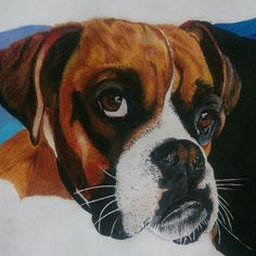 Color pencil Boxer