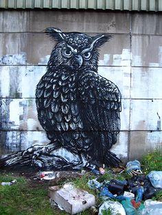 roa | owl | belgium