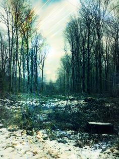 Empty forest  , Filter:pixlr o matic