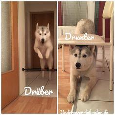 5 Indoor Aktivitäten mit Hund – Undercover Labrador