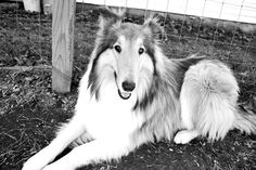 A post on healing dog skin allergies with quality dog food. Dog Skin Allergies, Dog Food Recipes, Husky, Healing, Sweet, Dogs, Animals, Candy, Animales