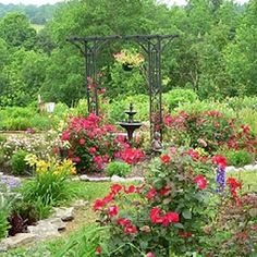 Go Bold with Color....Don't be afraid of color -- make strong reds sing against a background of green. The black arbor creates a distinctive focal point. Lovr this!!
