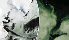 Uma enorme extensão de gelo verde claro foi fotografada na Antártica pela NASA, durante um voo de rotina. O gelo verde cobre aproximadamente 1000 km ²