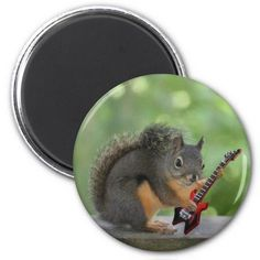 SOLD 12 Squirrel Playing Electric Guitar Refrigerator Magnets by FunNaturePhotography. #guitars #music #squirrels #buttons http://www.zazzle.com/funnaturephotography*