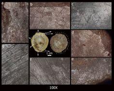 Efefuturo.- Los hombres prehistóricos que ocuparon la cueva de Altamira no solo pudieron utilizar conchas como adorno, en colgantes o para decorar la ropa, sino que, según las últimas investigaciones, algunos de los caparazones recolectados pudieron usarse también para obtener el ocre de las pinturas rupestres. Imagen de la UC
