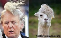 Take our poll: Animals That Could Be Donald Trump - Cast your vote, and cast a character!