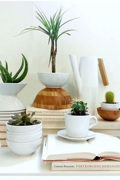 IKEA Fan Favorite: Succulents! These cute, low maintenance plants are a great way to bring a touch of nature to your home.
