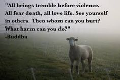 Image result for vegan-quotes