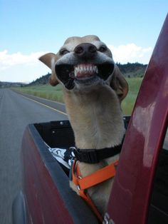 This dog, is happy.
