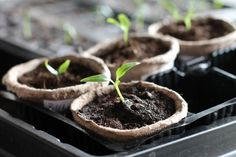 BY RACHEL WALLACE You don't have to live on a farm to grow your own food. You can grow a variety of plants even in the most urban setting. And while you