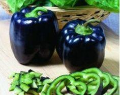 Organic Heirloom RARE 5 Black Deep Purple Pepper Seeds Bell Sweet Pepper F1 Vegetable Seeds Garden Seeds F66