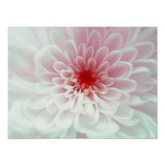 =>>Save on          	Cute Pink red and white Flower Poster           	Cute Pink red and white Flower Poster This site is will advise you where to buyShopping          	Cute Pink red and white Flower Poster Review on the This website by click the button below...Cleck Hot Deals >>> http://www.zazzle.com/cute_pink_red_and_white_flower_poster-228116856126152633?rf=238627982471231924&zbar=1&tc=terrest