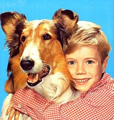 Jon Provost with Lassie Jon Provost (Jonathan Bion Provost) Provost is best known for his role as young Timmy Martin in the CBS Rough Collie, Collie Dog, Child Actors, Young Actors, Beautiful Cats, Beautiful Children, Dog Tv Shows, Jon Provost, Mejores Series Tv
