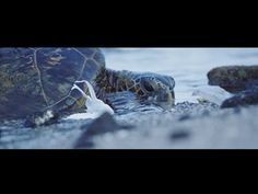 Plastic Pollution, Our Oceans, Our Future... - YouTube