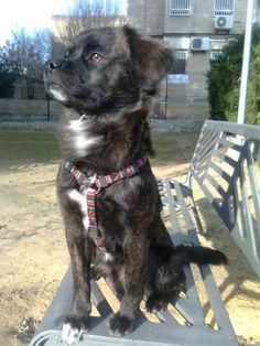 Este es Nero, en el barrio todos le conocen por lo noble que es. Es muy bueno y cariñoso, le encanta salir al campo y correr con otros perros. En casa es uno más de la familia y se porta muy bien. Todo el mundo le quiere. (Sevilla). (CARMEN ORTIZ).
