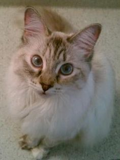 bella-blue - www.Cute-A-Rater.com - Vote for the cutest pet today!