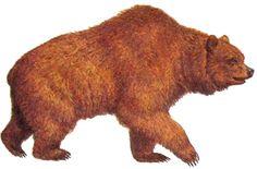 медведь рисунок - Поиск в Google