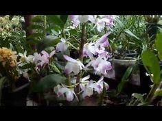 Orquídeas na Chuva - YouTube