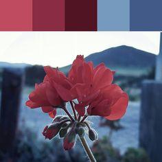 《Evening Petals Palette》