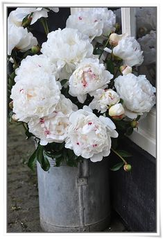 Peonies and zinc ... *sigh*!