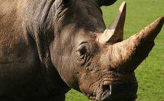 Real-time Anti-Poaching Intelligence Device Saving Rhinos | Care2 Causes