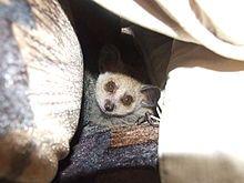 Grant's bushbaby | Grant's bushbaby Primates, Mammals, Habitats, Baby, Primate, Baby Humor, Infant, Babies, Babys