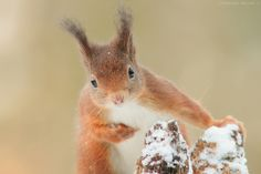 Snowy's portrait by Olivier Colle on 500px