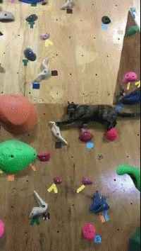 Rock climber cat!