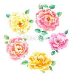 Watercolor Roses (graphic design inspiration)