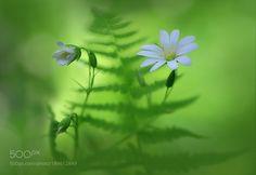 In wood greens. by viktorshnayder68