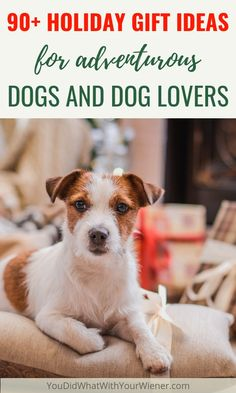 213 best cool dog products images dog products best dogs dog cat rh pinterest com