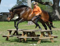 """Pat Parelli says, """"Prior and Proper Preparation Prevents Poor Performance.""""   (Linda Parelli and her horse Remmer jump a table together.)"""