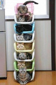 Opgestapelde katten
