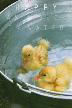 Cutest duckies ever!  great photo!