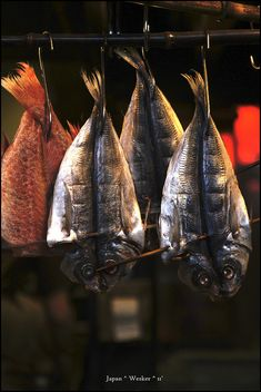 Japanese dried fish 干物