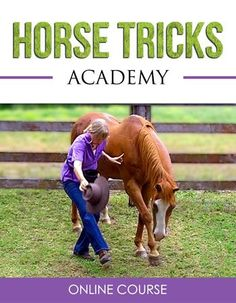Most tricks, even the complicated ones, start with a simple trick or are made up of several simple tricks joined together. So start byteaching yourhorsethese 10 super simple tricks and then usethem to buildlots of different tricks or even design your own! For example to teach yourhorse to do a 'Simple Bow' just break the trick into small steps. First teach your horse to put hishead down and then teach himto put hisleg forward. Then just ask your horse to dothe two movements ...