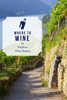 Where to Wine in Wachau, Austria. You can sample wines that come from the Grüner Veltliner grape, creating dry wines that taste natural and refreshing. Tour the wineries and vineyards of the Wachau region and bottle up some of your favorite varieties to take back home.
