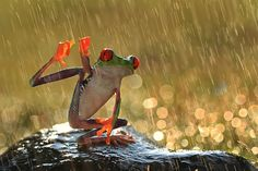 #rainy_day_status  #cute_rain_quotes #rain_status_today