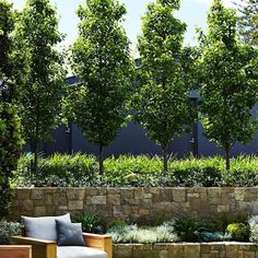 Ideas Backyard Landscaping Along Fence Trees Decor For 2019 Fence Trees, Backyard Trees, Backyard Fences, Garden Trees, Landscaping Along Fence, Landscaping Trees, Outdoor Landscaping, Luxury Landscaping, Landscaping Company