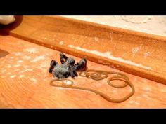 This Video Will Make You Even More Grossed Out By Spiders -- See What Was Living Inside Of One