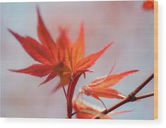 Red Maple Leaves Abstract 3 Wood Print by Jenny Rainbow Maple Leaves, Got Print, Abstract Watercolor, Art Techniques, Fine Art Photography, Fine Art America, Im Not Perfect, Photographic Prints, Rainbow